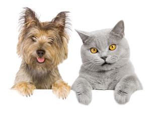 Cane e Gatto sensore pet immunity